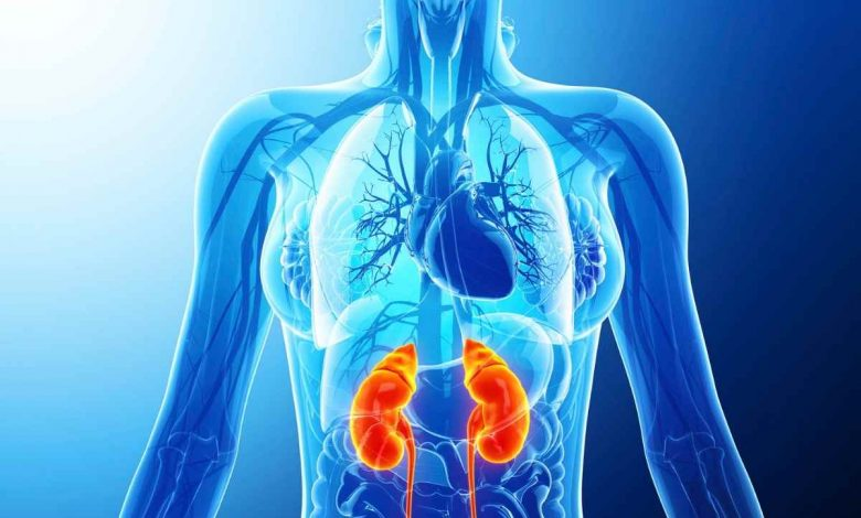 this-is-how-the-immune-system-is-strengthened-according-to-harvard-experts