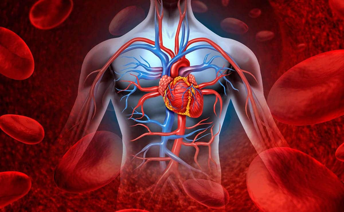 why-is-potassium-important-for-the-heart-what?